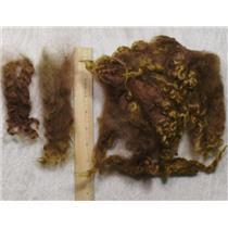 Cotswold wool locks varagated warm brown 1oz  23444
