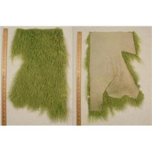 Quarter pelt Lime green seam Tibetan lambskin  24586