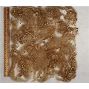 "Blondest gold (golden blonde) yearling mohair locks sample 3-5""fine  25280"