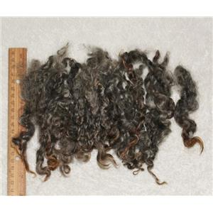 "Wensleydale wool locks dark salt and pepper gray 6-8""  25564"